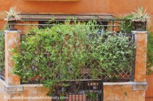 ogród włoski pergola