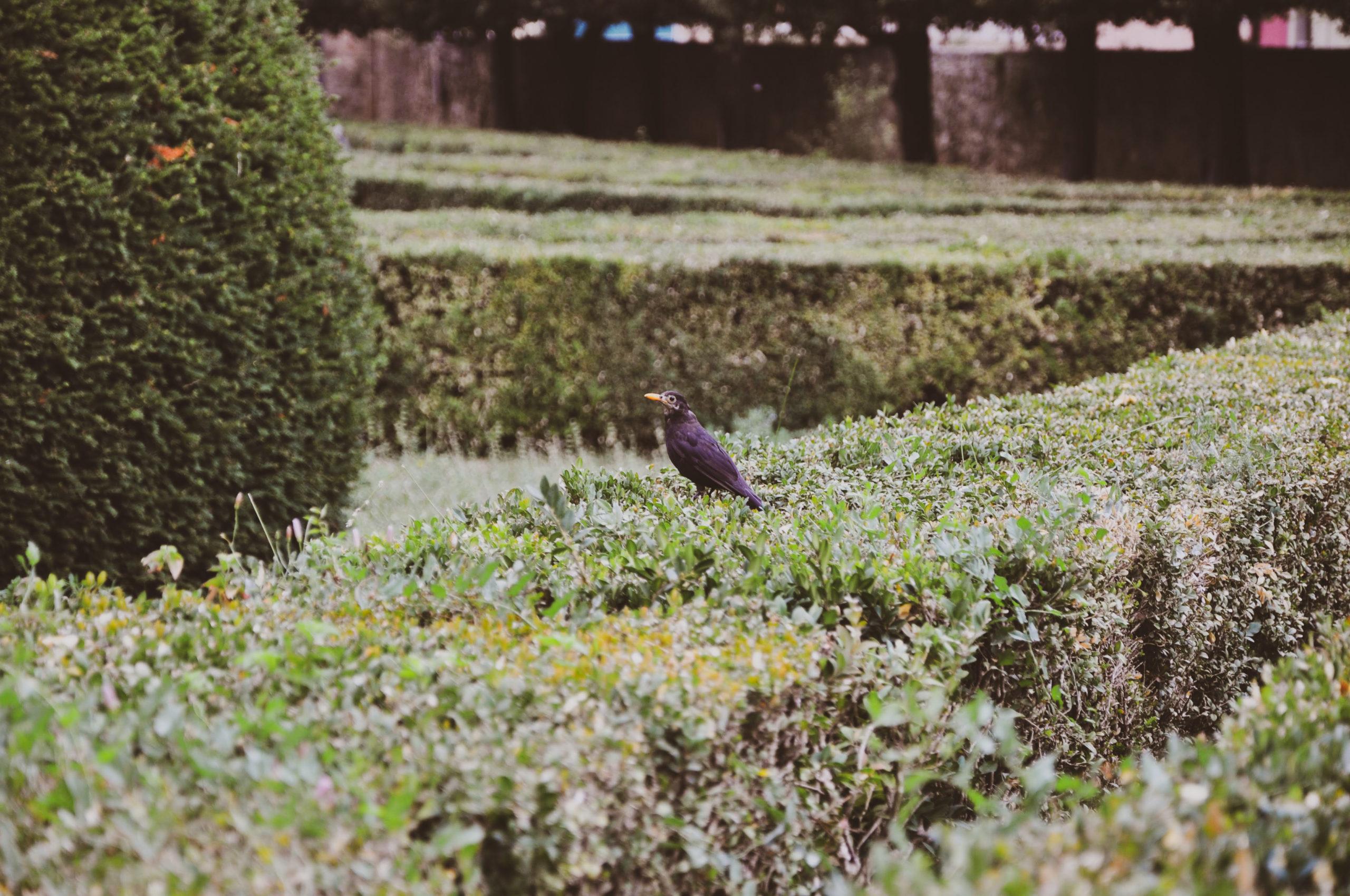 symetryczny włoski ogród
