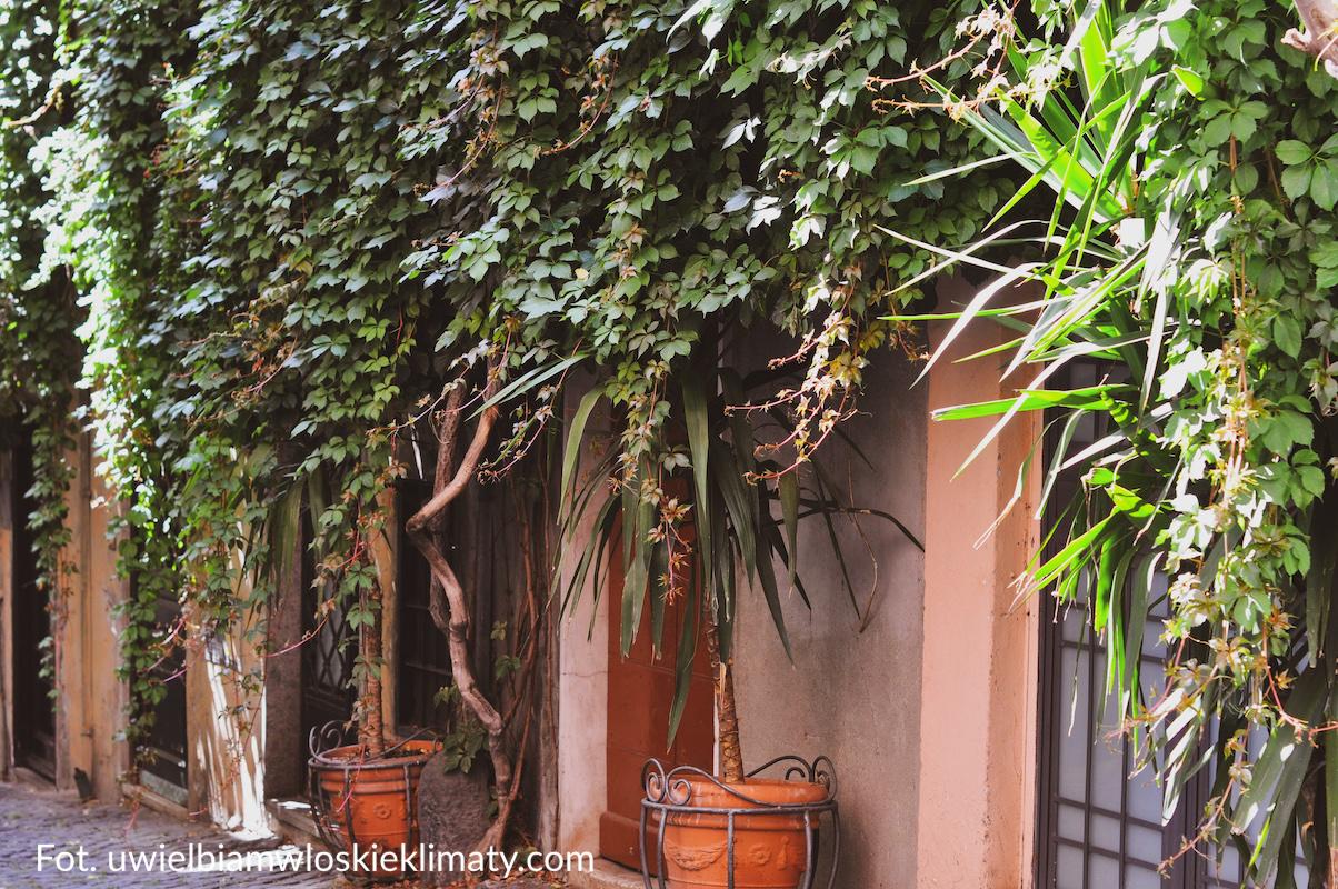 włoski ogród rośliny pnące